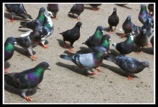 Птица разная - Страница 4 42748--10711093-m549x500