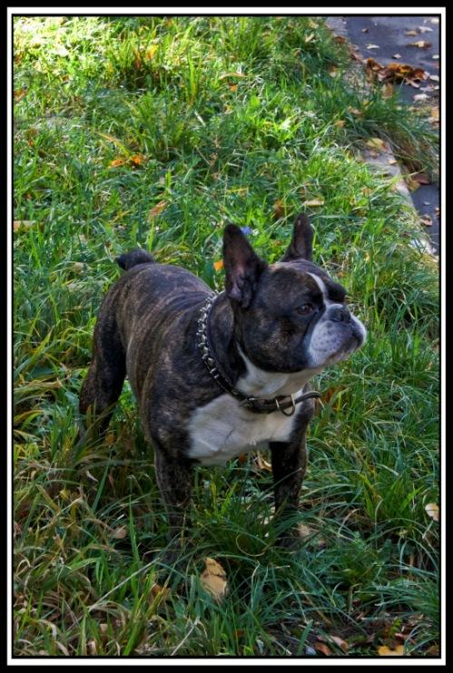 Собачий портрет - Страница 3 42748--11383501-m750x740