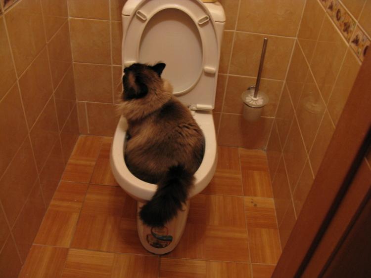 Тяжело ходить в туалет что делать